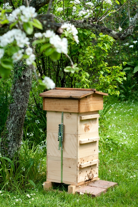 Warre hive sited for morning sun, afternoon shade