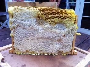 Capped honey in a semi frame